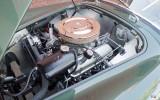 1965-shelby-cobra-dragonsnake-03